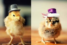 Dressed-up and ready for Easter.